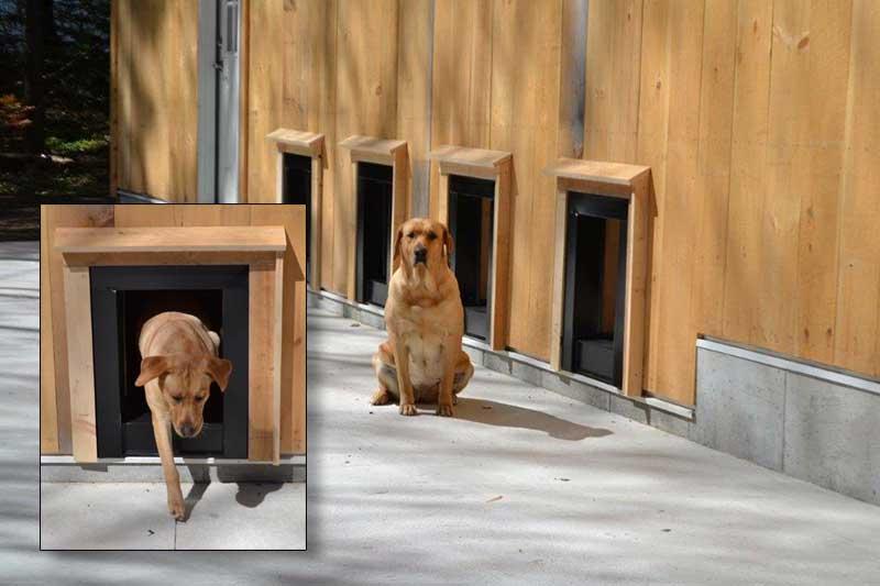 dog-boarding-4